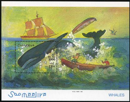 Immagine di 60 - CETACEI