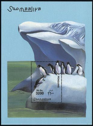 Immagine di 76 - PINGUINI