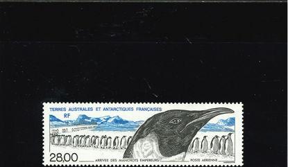 Immagine di 133 - FAUNA: PINGUINI