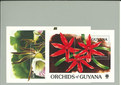Immagine di 52 - FLORA: ORCHIDEE