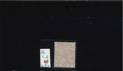 Immagine di 56 - REGINA VITTORIA 2,5 s ROSA C T5