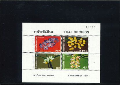 Immagine di 5 - ORCHIDEE