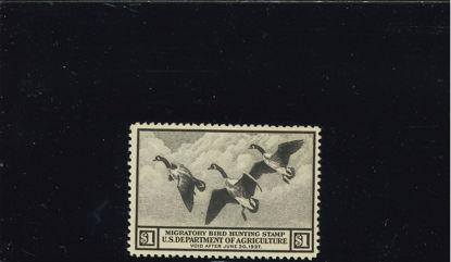 Immagine di 1936 - ANATRE SELVATICHE -BRUNO SCURO-