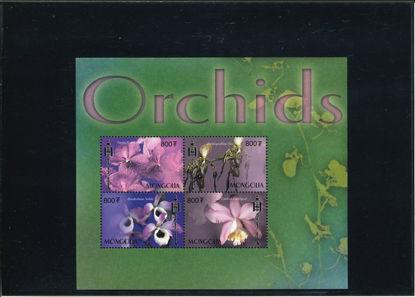 Immagine di 2682A - FIORI: ORCHIDEE